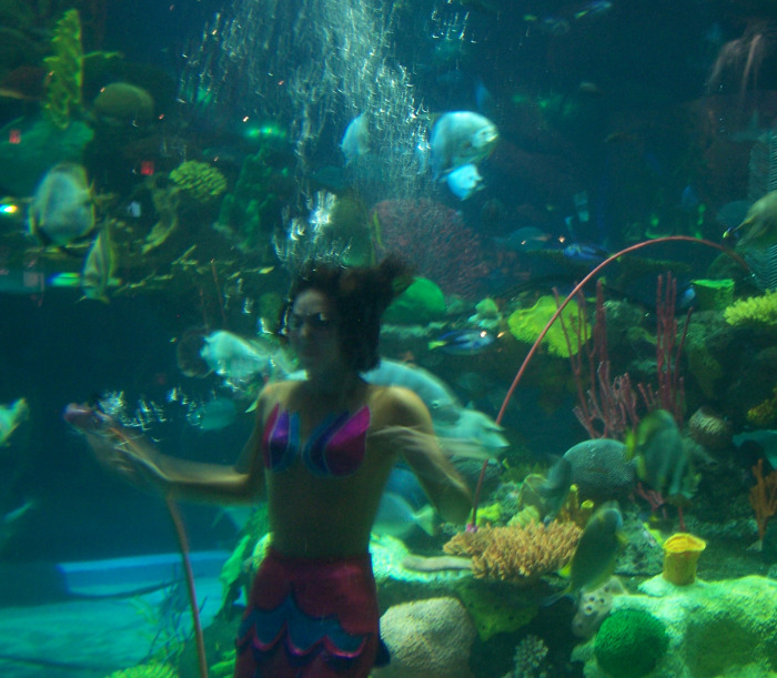 Wp images fish tank post 5 for Mermaid fish tank