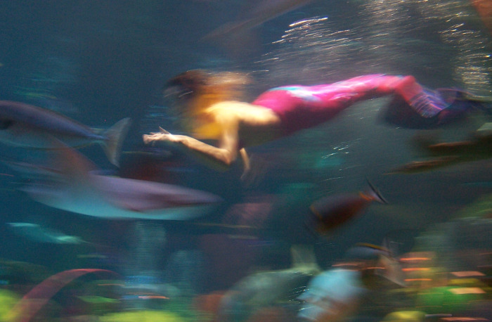 Pictures of Real Mermaids http://fairychildheirlooms.wordpress.com/2009/08/21/second-star-to-the-right-blog-party/